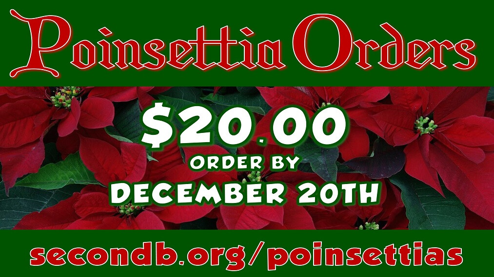 Poinsettia Orders